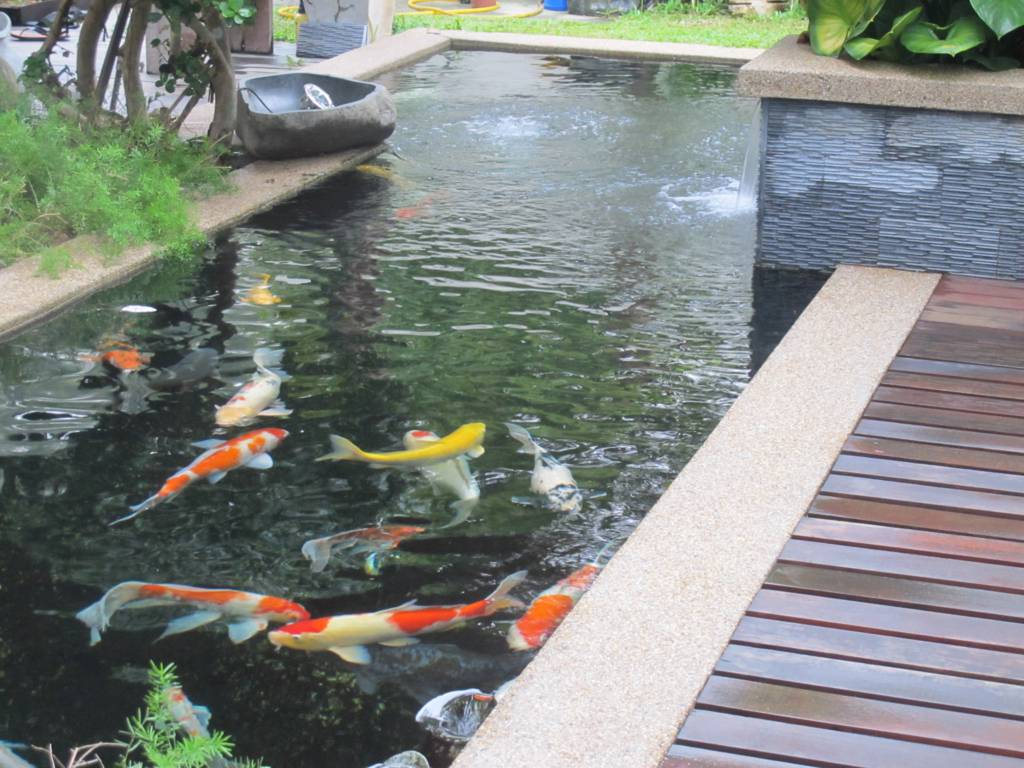 Fish ponds for Best pond design